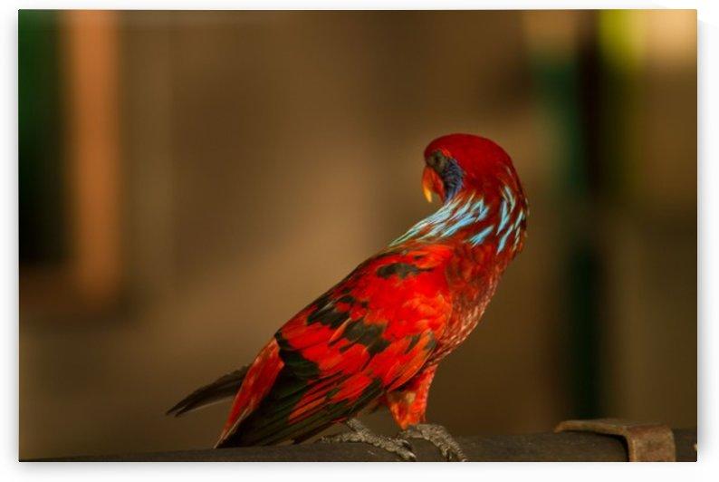 Nature and Birds  14 by Jeetendra Kumar Choudhary
