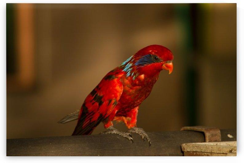 Nature and Birds  13 by Jeetendra Kumar Choudhary