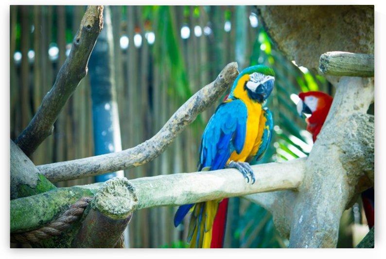 Nature and Birds   3 by Jeetendra Kumar Choudhary