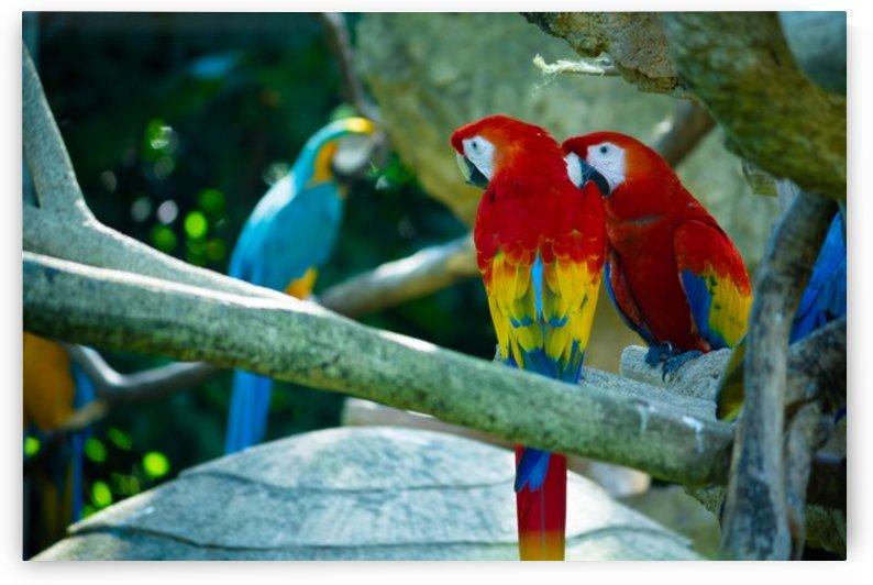Nature and Birds   4 by Jeetendra Kumar Choudhary