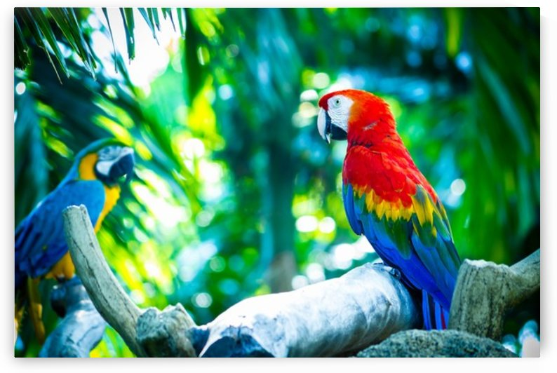 Nature and Birds   5 by Jeetendra Kumar Choudhary