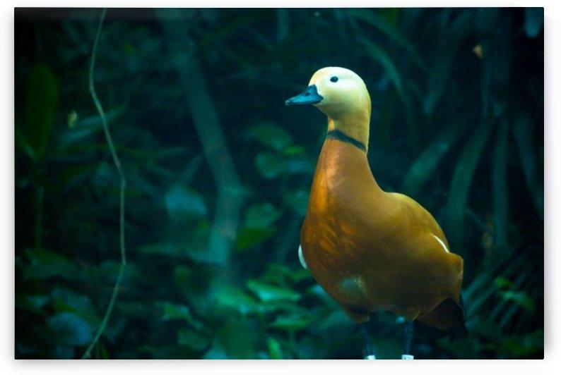 Nature and Birds   6 by Jeetendra Kumar Choudhary