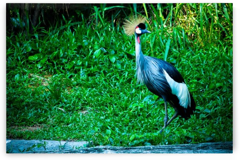 Nature and Birds   7 by Jeetendra Kumar Choudhary