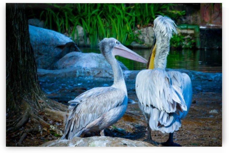 Nature and Birds   9 by Jeetendra Kumar Choudhary