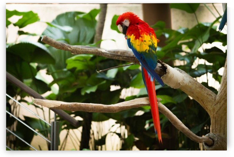 Nature and Birds by Jeetendra Kumar Choudhary