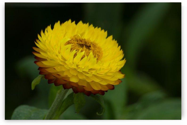 Nature and Flowers 7 by Jeetendra Kumar Choudhary