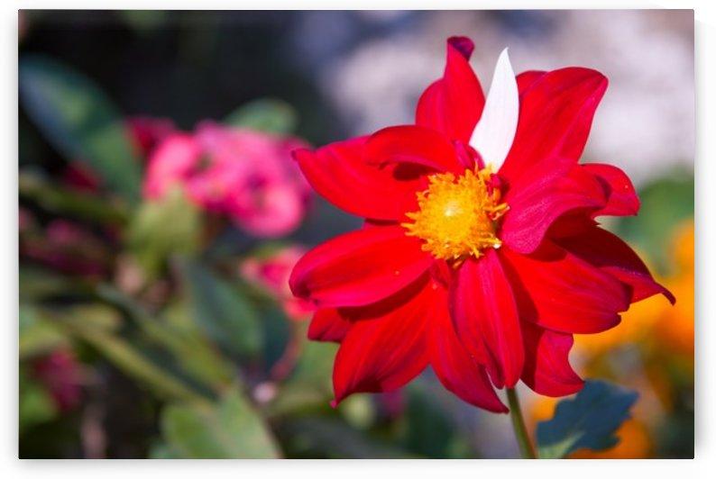 Nature and Flowers 1 by Jeetendra Kumar Choudhary