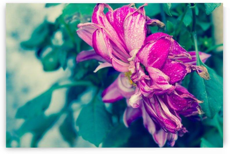 Nature and Flowers 2 by Jeetendra Kumar Choudhary