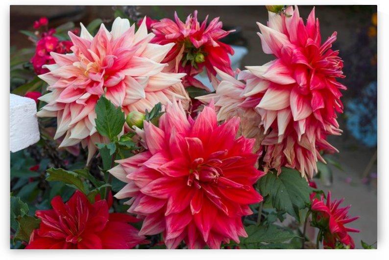 Nature and Flowers 4 by Jeetendra Kumar Choudhary