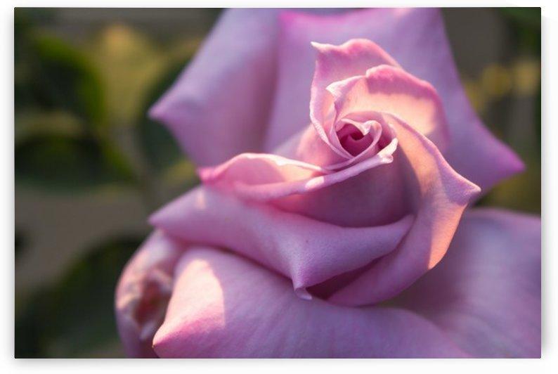 Nature and Flowers 6 by Jeetendra Kumar Choudhary