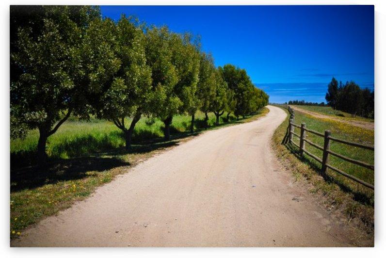Driveway by Jure Brkinjac