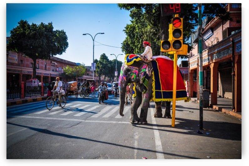 Jaipur elephant by Jure Brkinjac
