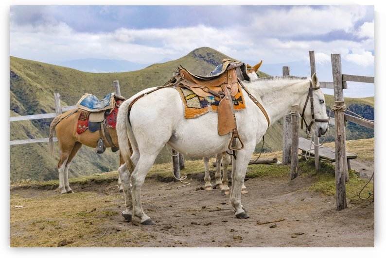 Two Horses Tied at the Top of Mountains in Quito Ecuador_1 by Daniel Ferreia Leites Ciccarino