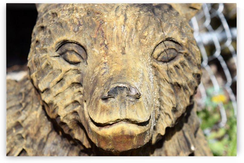 The Animal Totem  by Jarrod Sammis