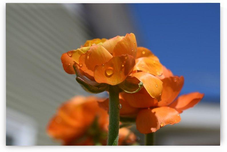 Spring in Bloom by Jarrod Sammis