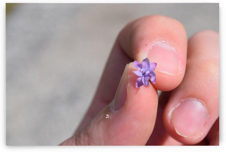 Tiny Flower  by Jarrod Sammis