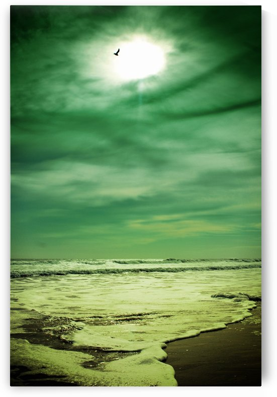 Florida Beach 1 by Christopher Dormoy