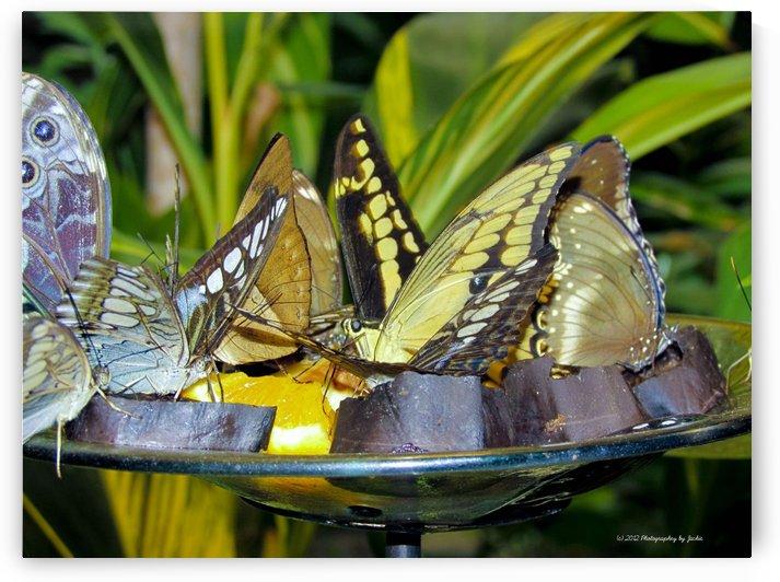butterflies by Jackie Popp