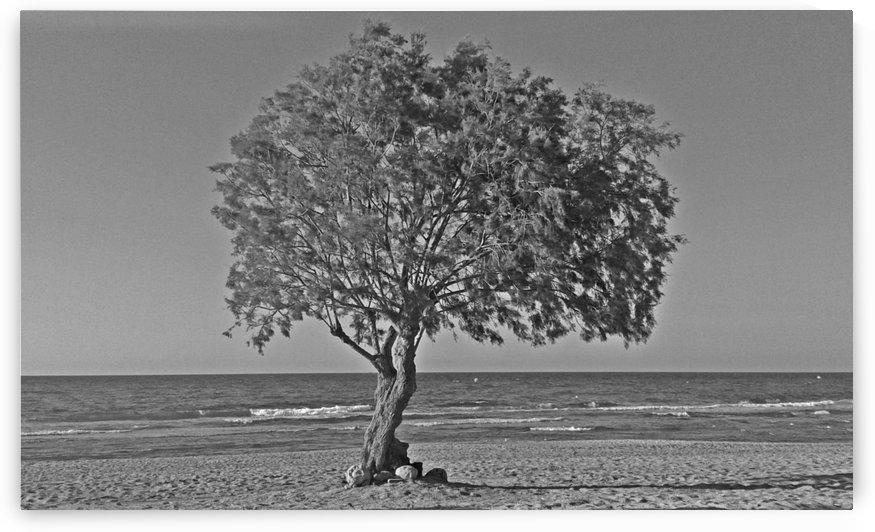 Mediterranean atmosphere by Vlad Radulian