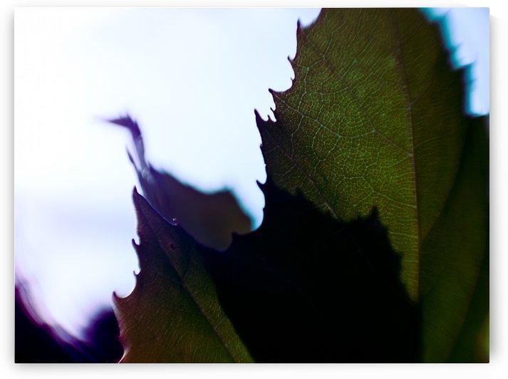 leaf by Victor F Rodriguez Jr