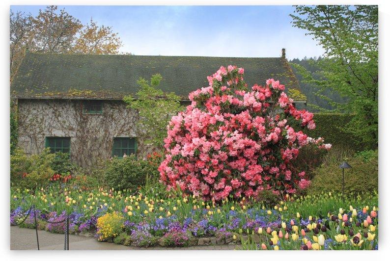Butchart Gardens by Robert Stewart