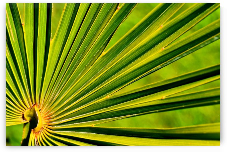PALM-TREE LEAF 1 by Jean-Jacques MASSOU