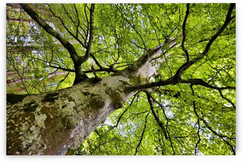 TREE 1 by Jean-Jacques MASSOU