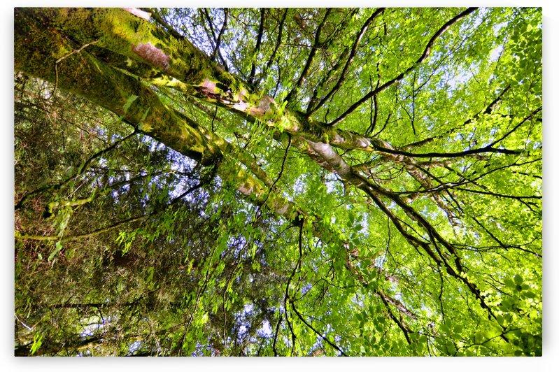 TREE 9 by Jean-Jacques MASSOU