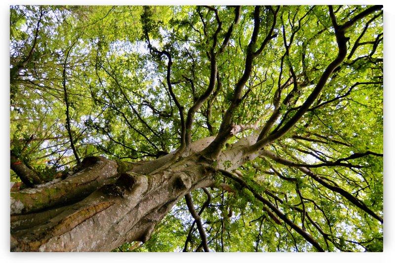 TREE 11 by Jean-Jacques MASSOU