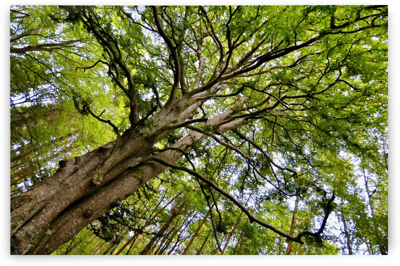 TREE 12 by Jean-Jacques MASSOU