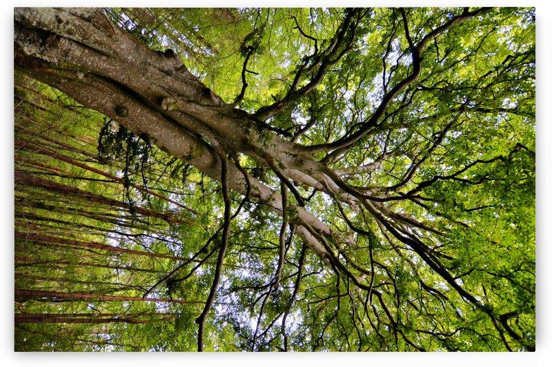 TREE 13 by Jean-Jacques MASSOU