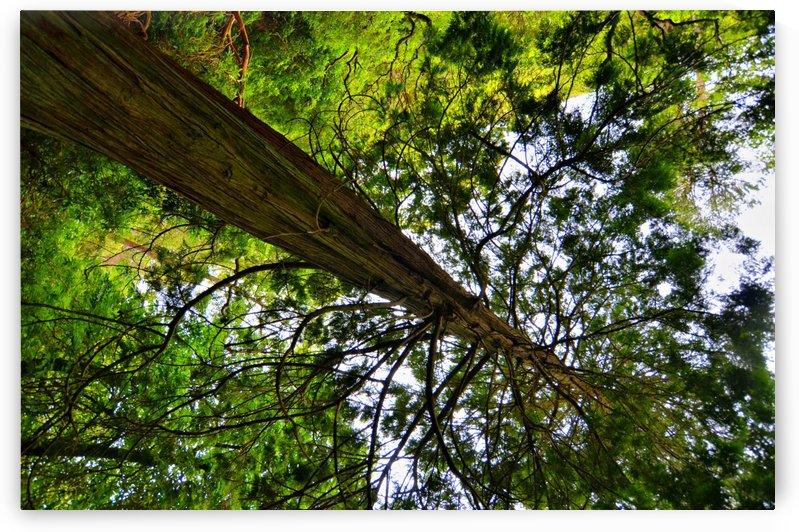TREE 14 by Jean-Jacques MASSOU