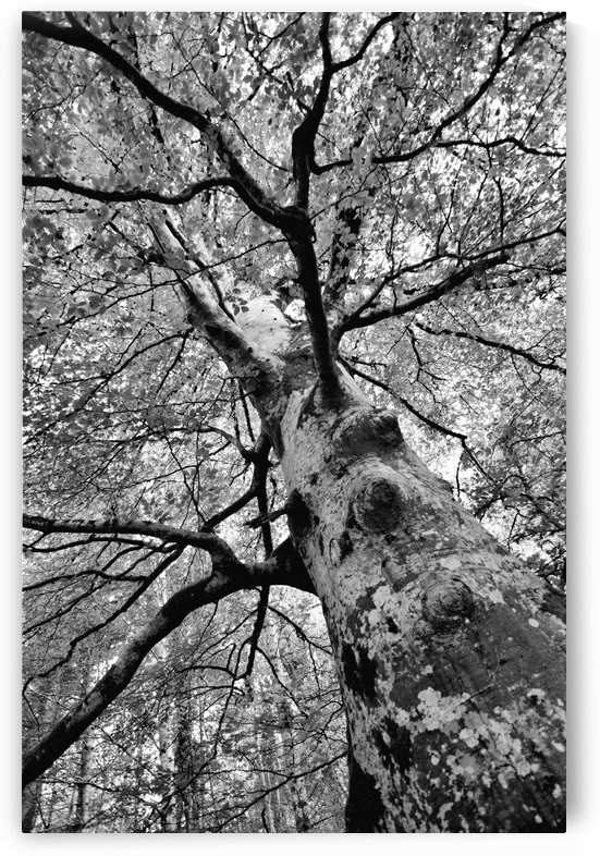 TREE 1BW by Jean-Jacques MASSOU