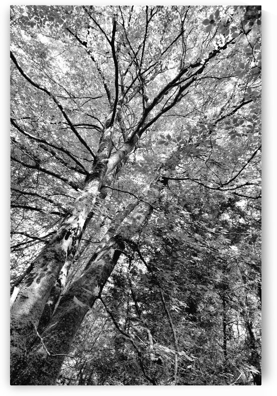 TREE 9BW by Jean-Jacques MASSOU