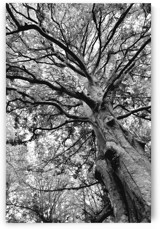 TREE 11BW by Jean-Jacques MASSOU