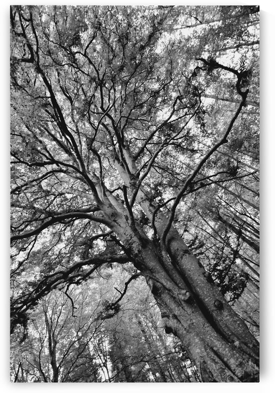 TREE 12BW by Jean-Jacques MASSOU