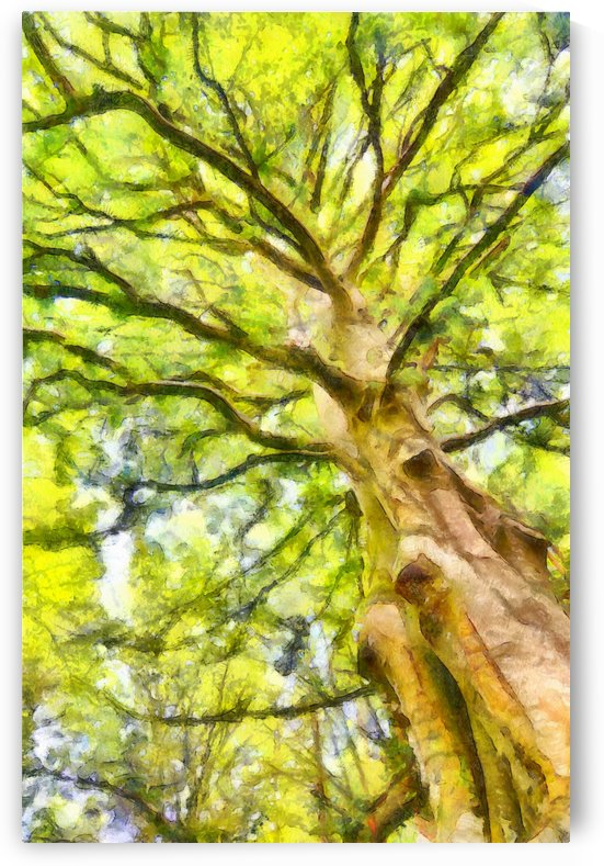 TREE 11 WATERCOLOR by Jean-Jacques MASSOU