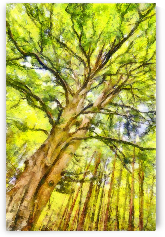 TREE 13 WATERCOLOR by Jean-Jacques MASSOU