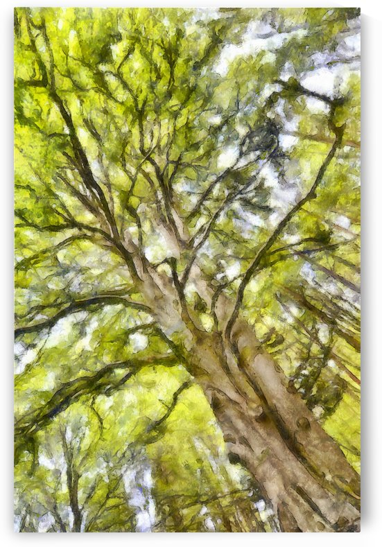 TREE 12 WATERCOLOR by Jean-Jacques MASSOU