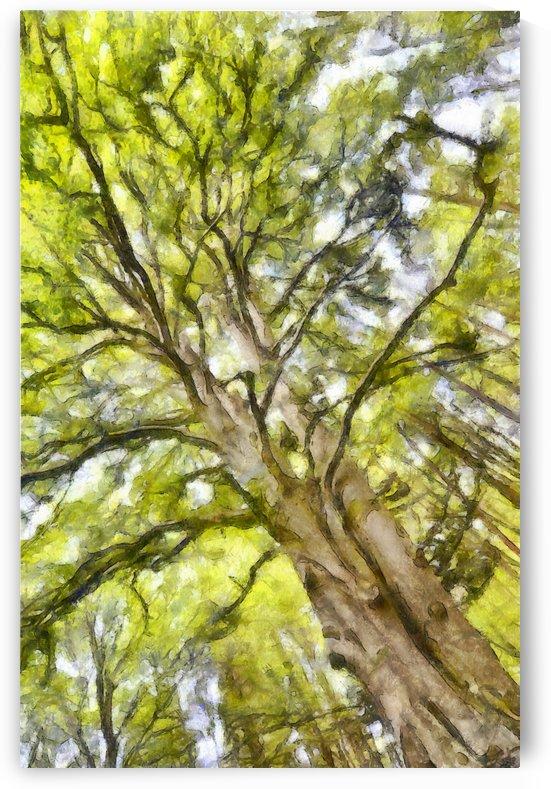 TREE 12 WATERCOLOR by Jean-Jacques MASSOU