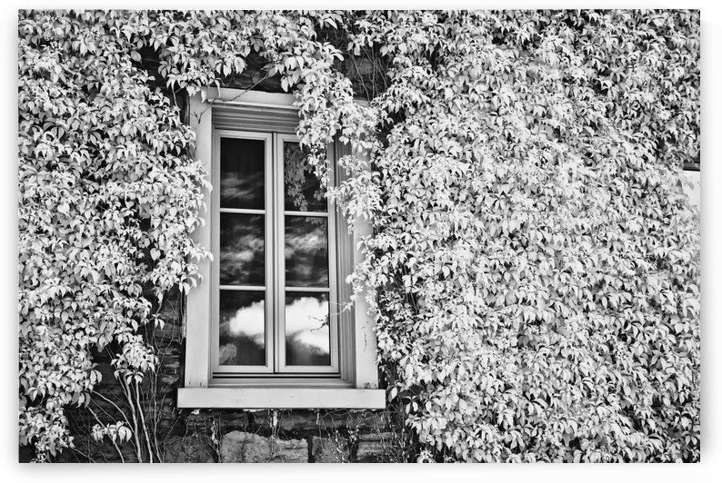 Infrared Window by Michel Nadeau