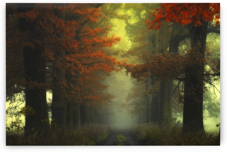 Shaman_s road on the other side by Janek Sedlar