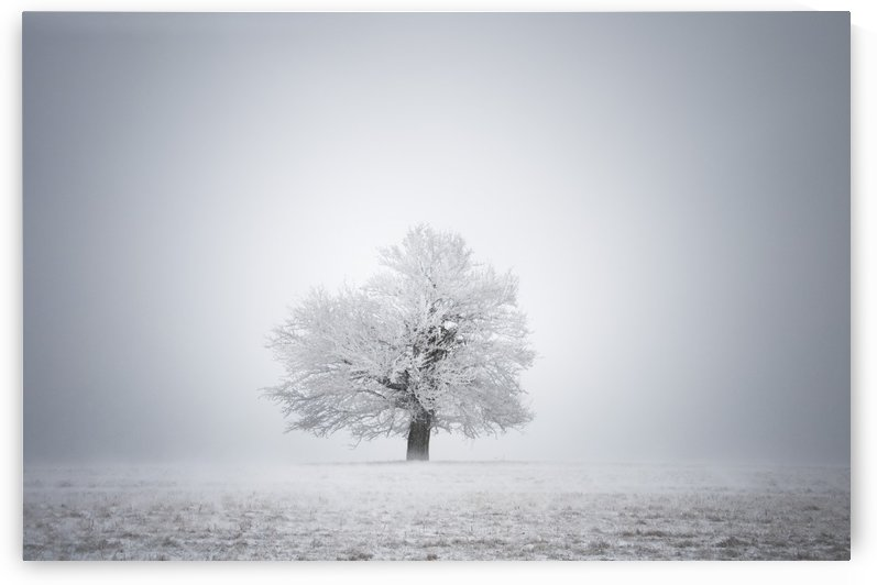 White solitude and light by Janek Sedlar