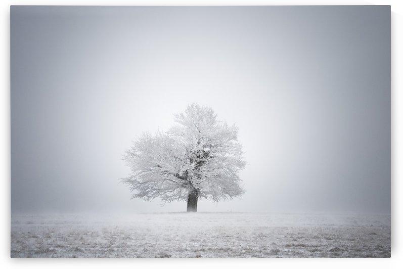 White solitude and light by Janek Sedlar