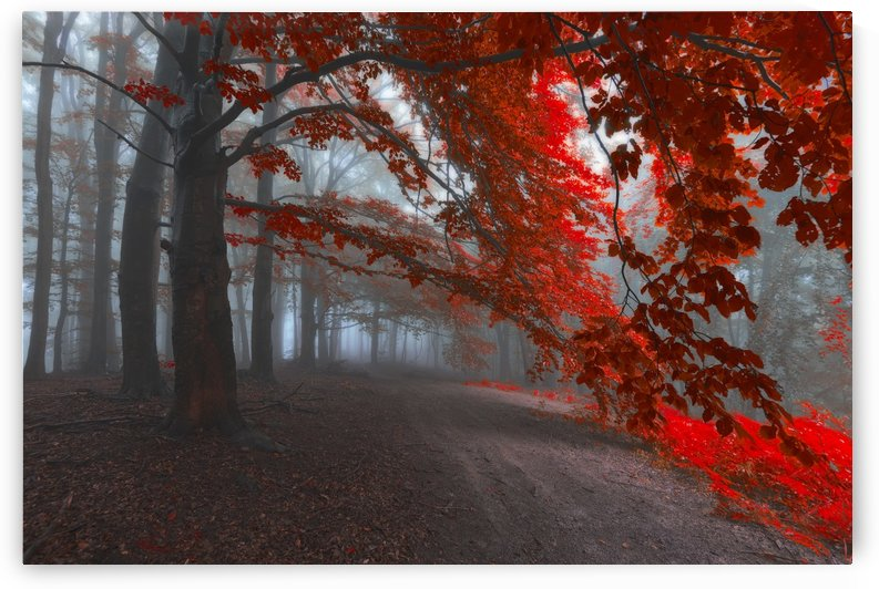 Road of Seraphines by Janek Sedlar