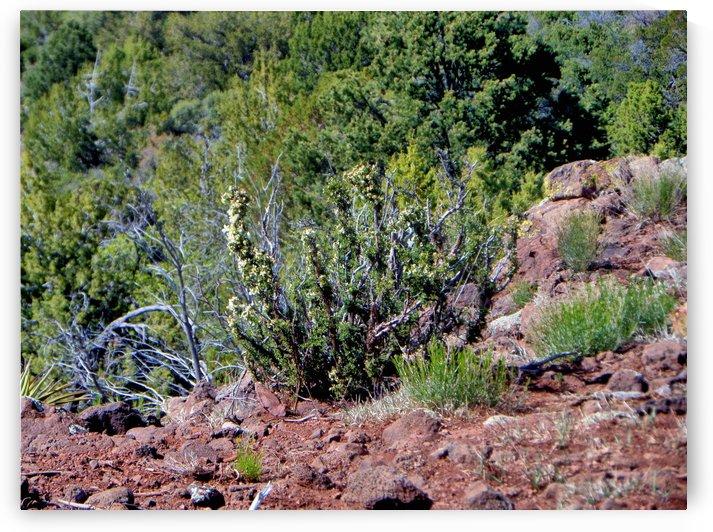 cactusinwild by Debbie-s Photo Korner