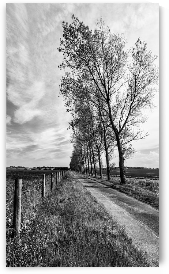 Tree Line by Keith Truman
