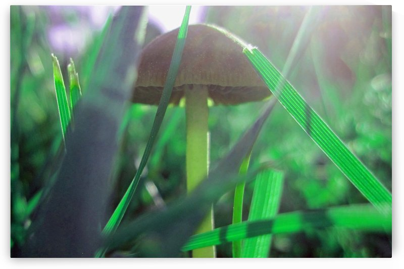 Mushroom 4 by Tammy Shook aka Kelra