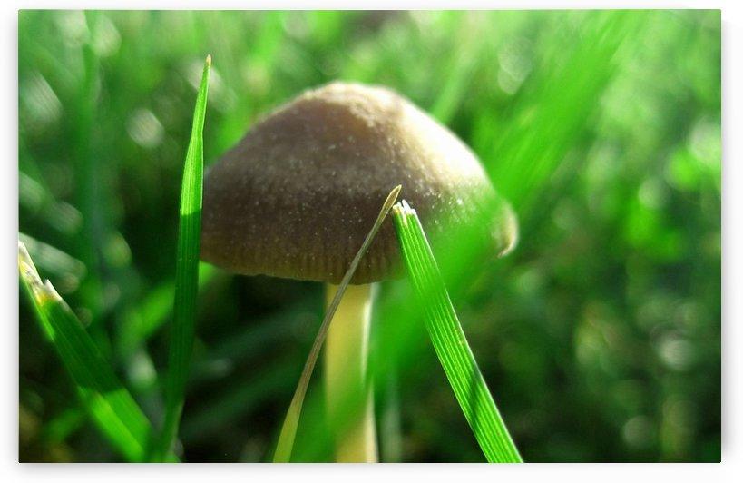 Mushroom by Tammy Shook aka Kelra
