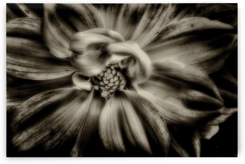 Bloom in Black & White by Scott Hryciuk